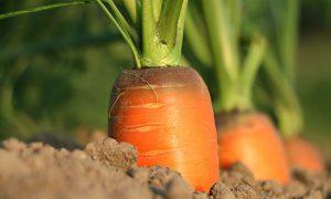 Sok z marchwi- jak działa na zdrowie oraz urodę ?